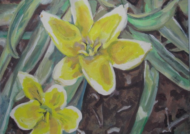 Spring Flowers, Yellow