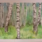 Painting birch trees